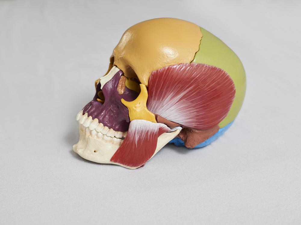 Kiefergelenk und Cranium